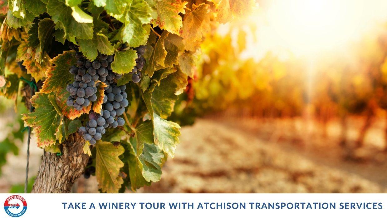 Take a Winery Tour